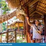 Vinpearl Safari PQ 4