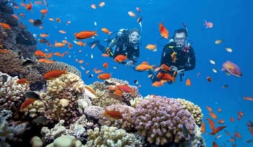 Combo Nha Trang: Khách Sạn 4 Sao + Tour Đảo Bằng Cano & Tắm Bùn