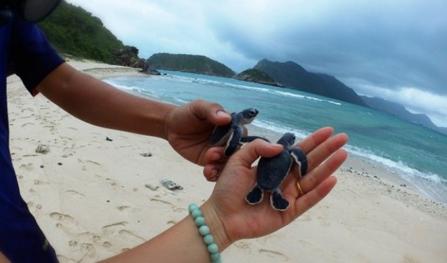Rùa biển Côn Đảo 1